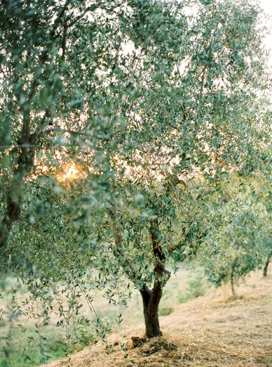 Olive grove wedding at Podere Finerri the lazy olive in Tuscany