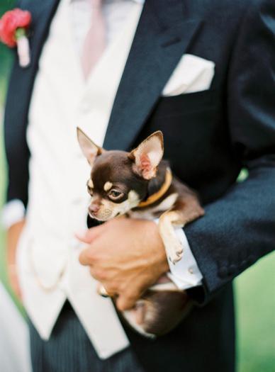 Groom & Chihuahua Wedding Italy wedding photography by peachesandmint.com