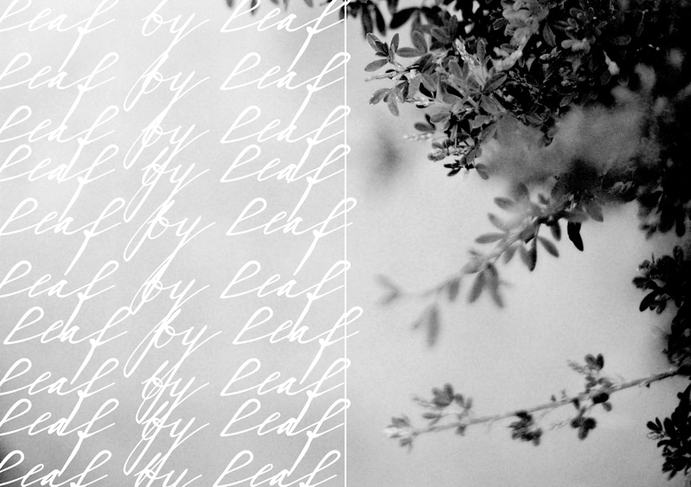 Leaf by Leaf Daily Diptych by Pia Clodi www.peachesandmint.com